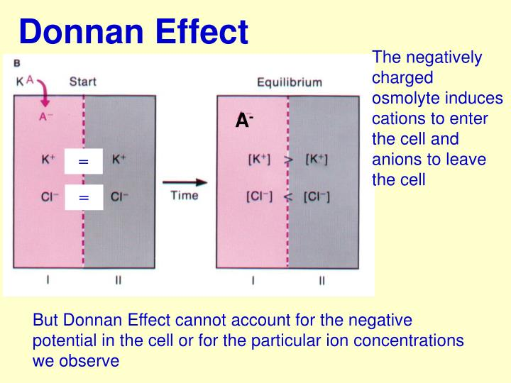Donnan Effect