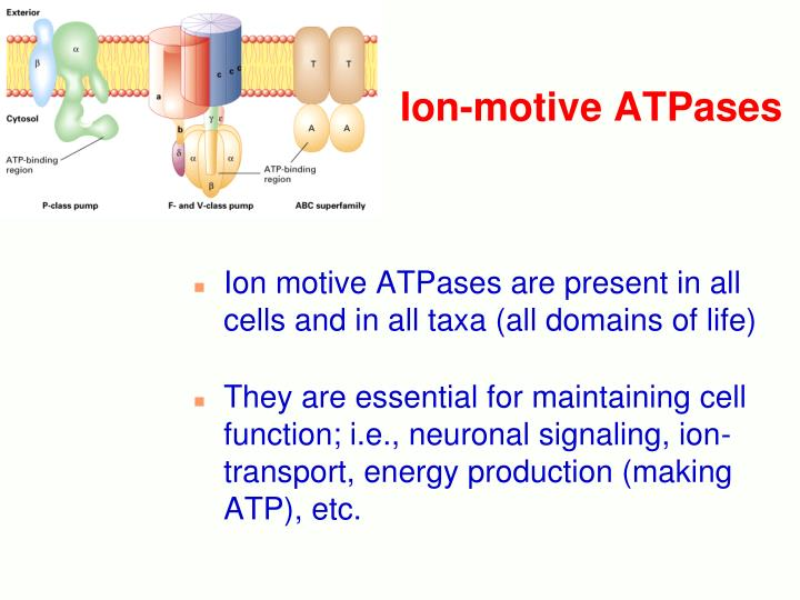 Ion-motive ATPases