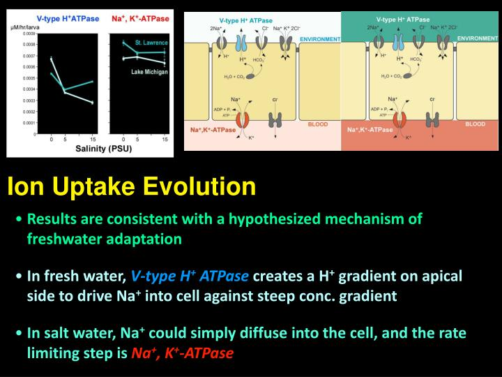 Ion Uptake Evolution