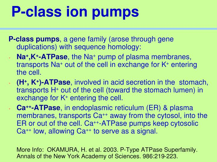 P-class ion pumps