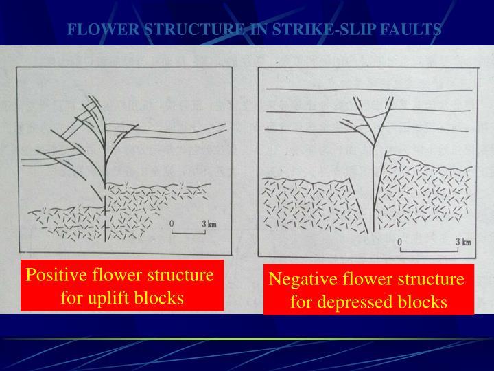 FLOWER STRUCTURE IN STRIKE-SLIP FAULTS