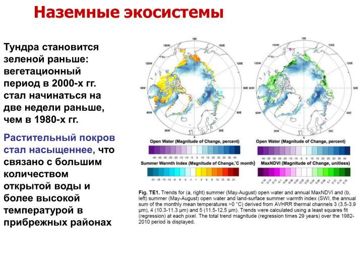Наземные экосистемы