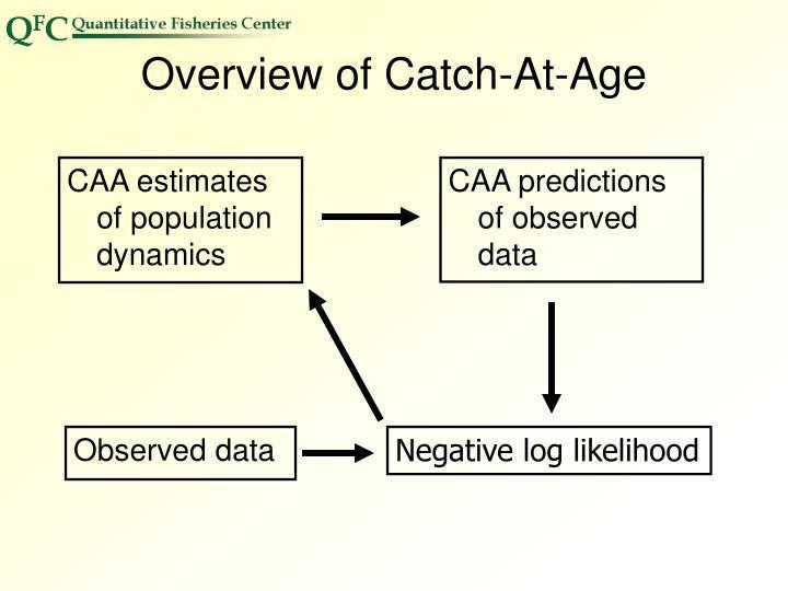 CAA estimates of population dynamics