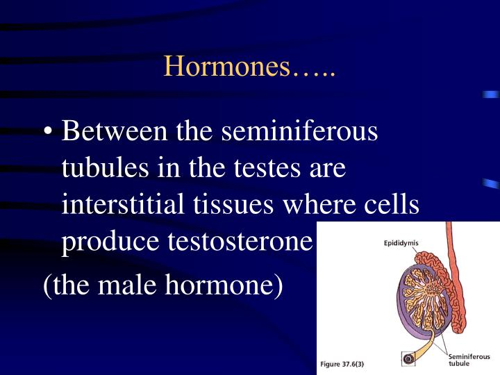 Hormones…..