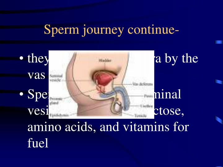 Sperm journey continue-