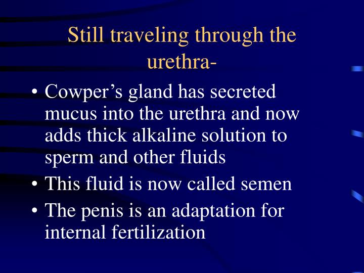 Still traveling through the urethra-