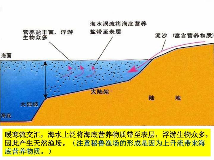 暖寒流交汇,海水上泛将海底营养物质带至表层,浮游生物众多,因此产生天然渔场。