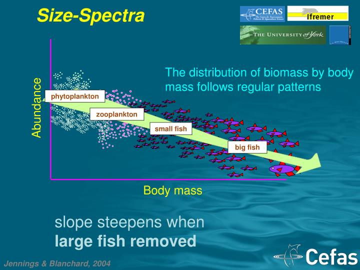 Size-Spectra