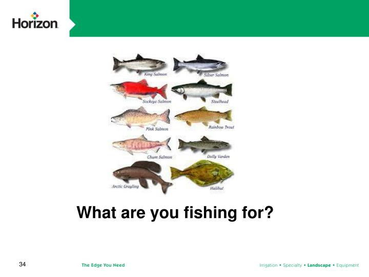 What are you fishing for?