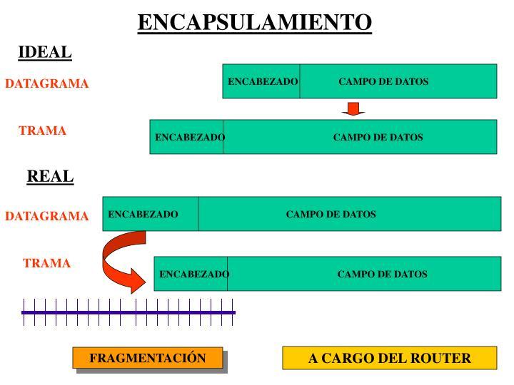ENCABEZADO                                           CAMPO DE DATOS