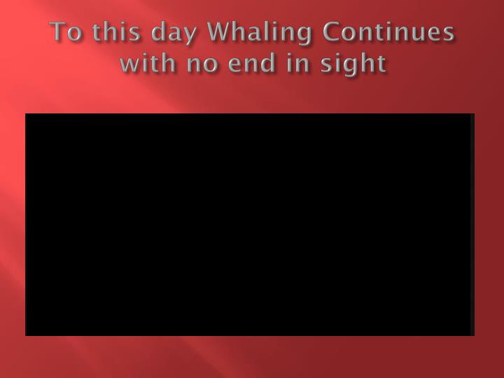 To this day Whaling Continues with no end in sight