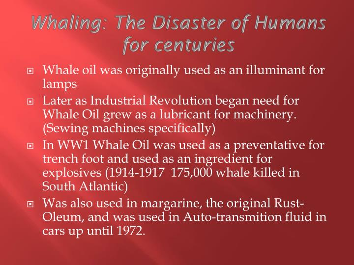 Whaling: The Disaster of Humans for centuries