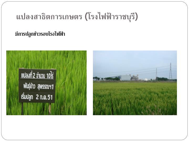 แปลงสาธิตการเกษตร