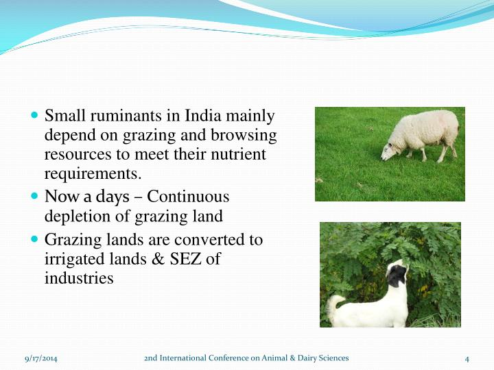 Small ruminants in India mainly depend on grazing and browsing resources to meet their nutrient requirements.