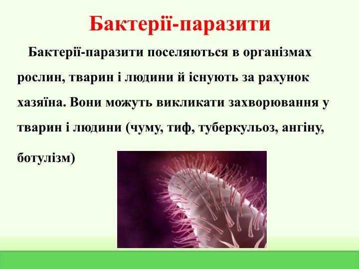 Бактерії-паразити