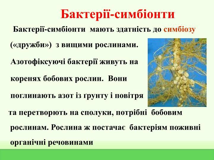 Бактерії-симбіонти