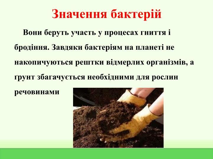Значення бактерій