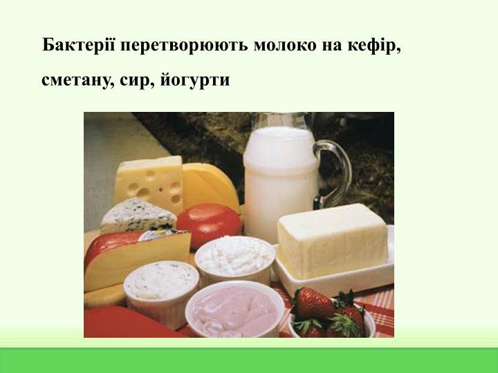Бактерії перетворюють молоко на кефір, сметану, сир, йогурти