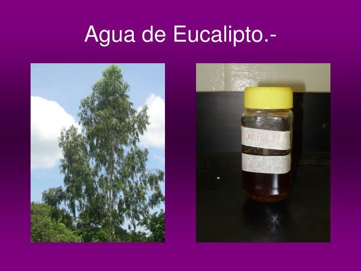 Agua de Eucalipto.-