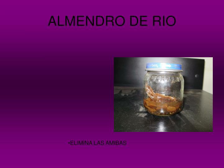 ALMENDRO DE RIO