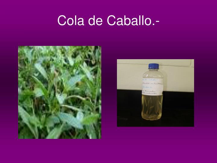 Cola de Caballo.-