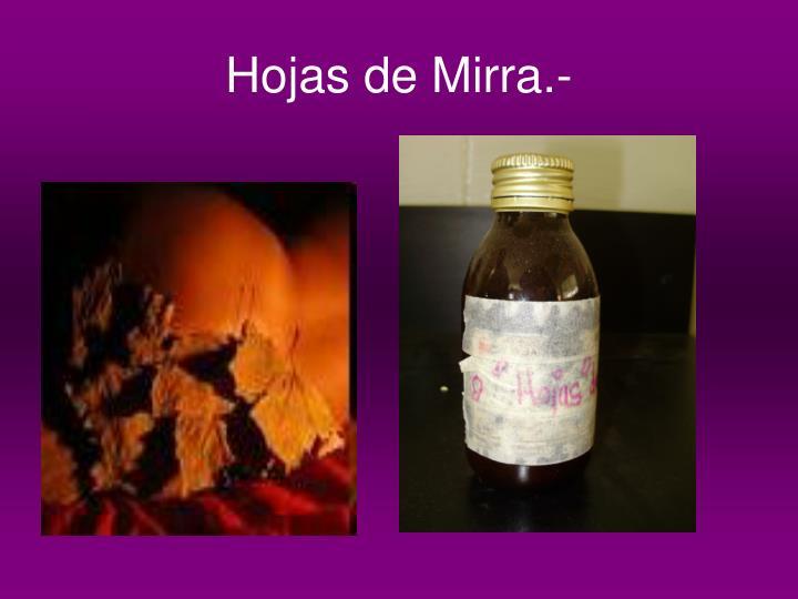 Hojas de Mirra.-