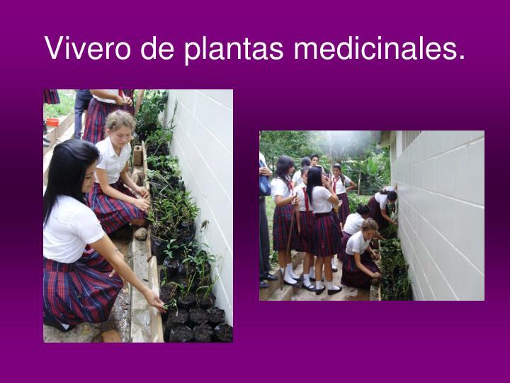 Vivero de plantas medicinales.
