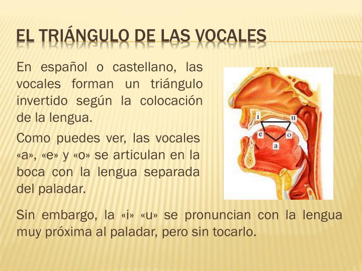 En español o castellano, las vocales forman un triángulo invertido según la colocación de la lengua.