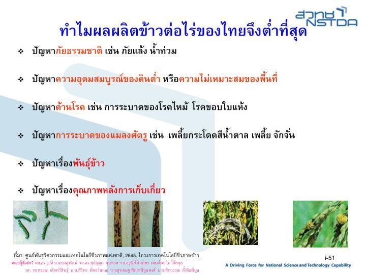 ทำไมผลผลิตข้าวต่อไร่ของไทยจึงต่ำที่สุด