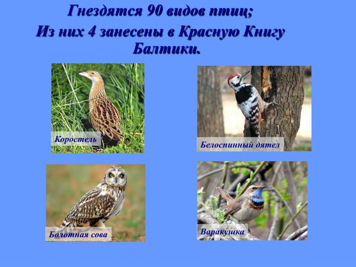 Гнездятся 90 видов птиц;