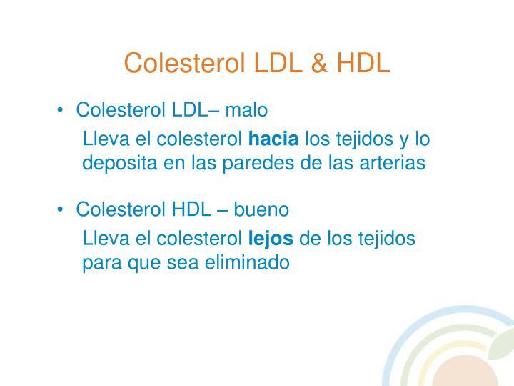 Colesterol LDL & HDL