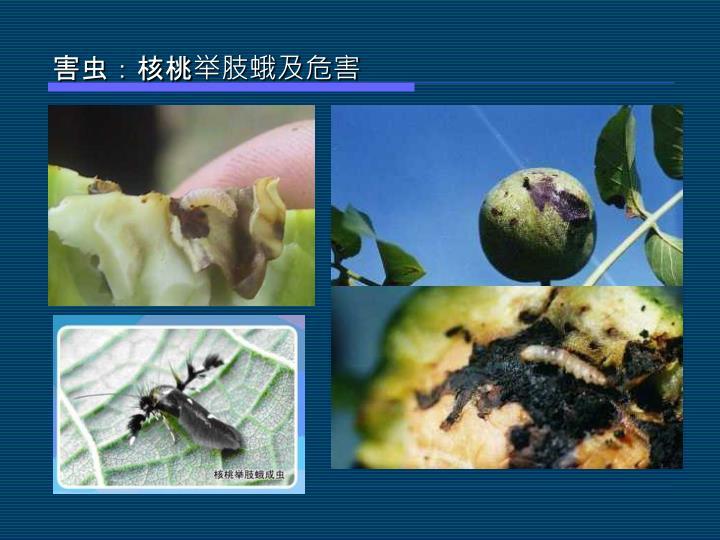 害虫:核桃举肢蛾及危害