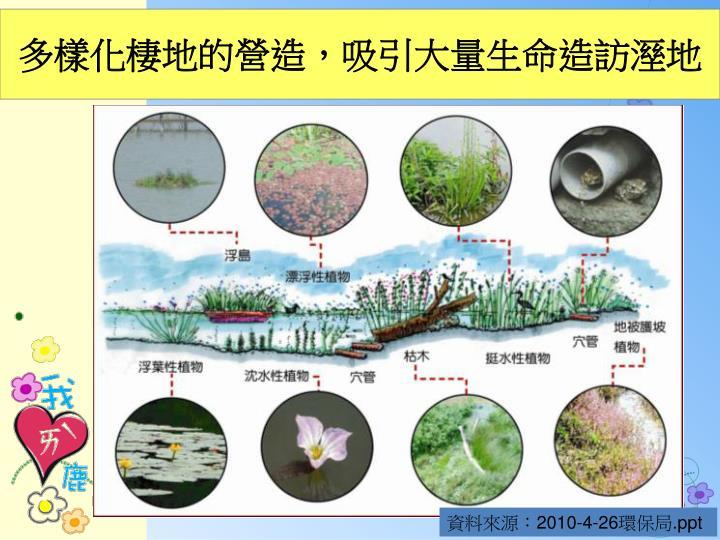 多樣化棲地的營造,吸引大量生命造訪溼地