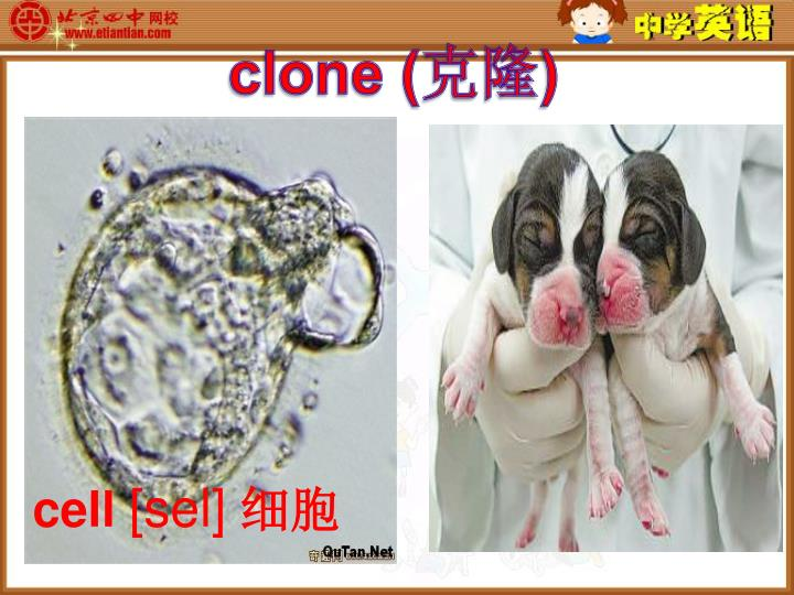 clone (