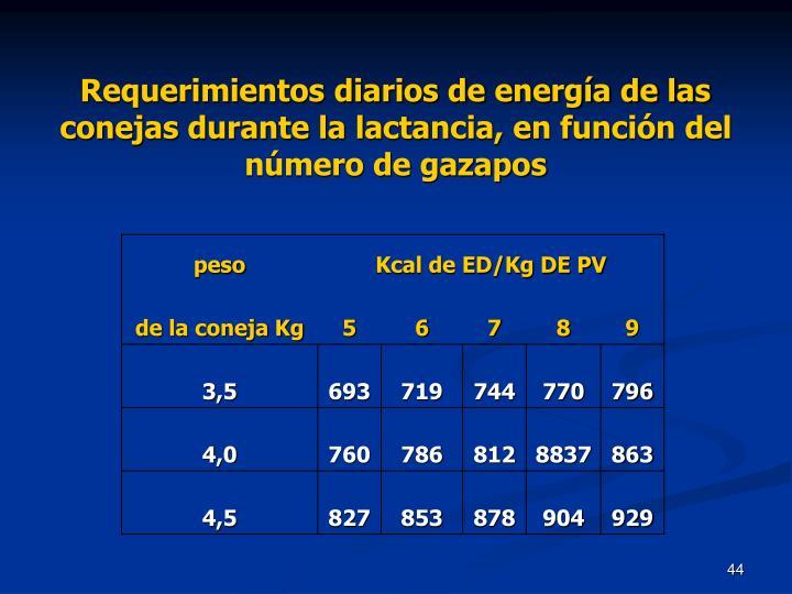 Requerimientos diarios de energía de las conejas durante la lactancia, en función del número de gazapos
