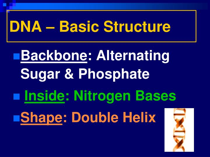 DNA – Basic Structure