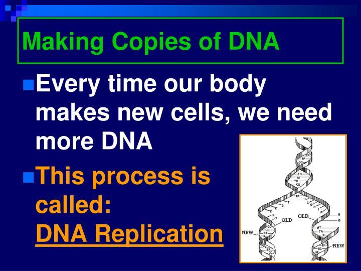 Making Copies of DNA