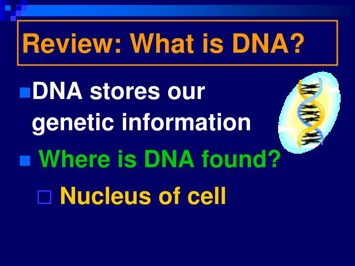 Review: What is DNA?