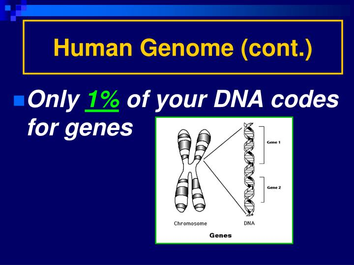 Human Genome (cont.)