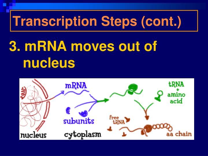 Transcription Steps (cont.)