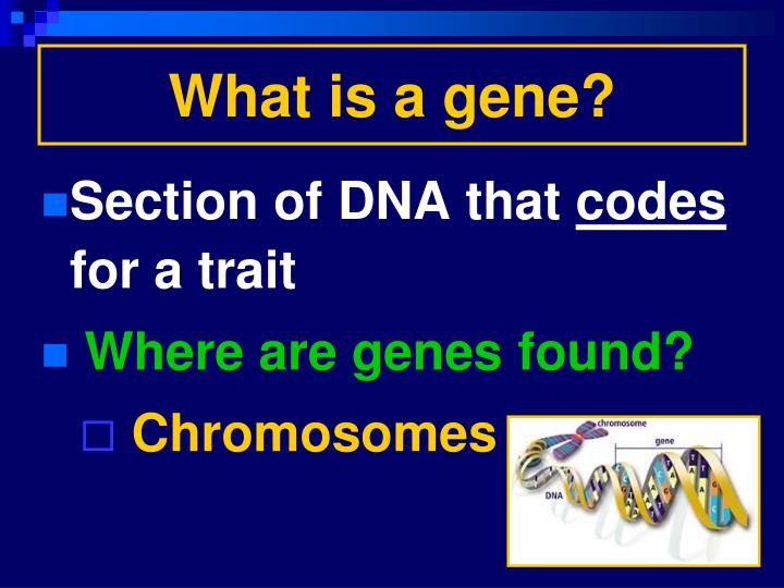 What is a gene?