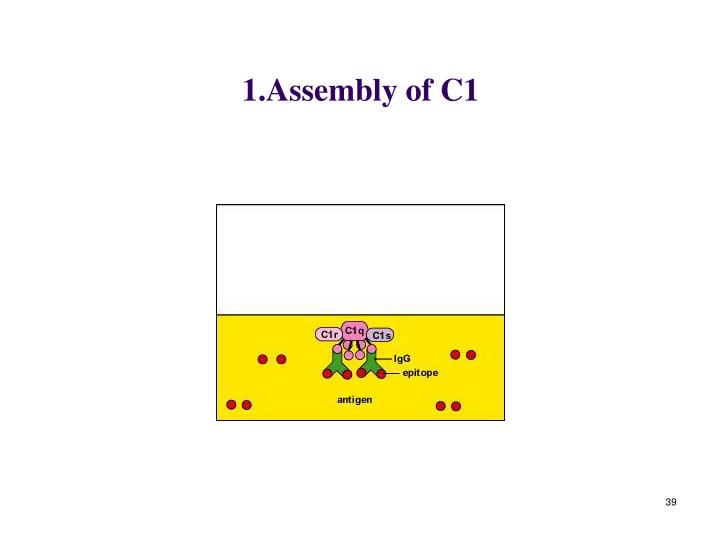 1.Assembly of C1