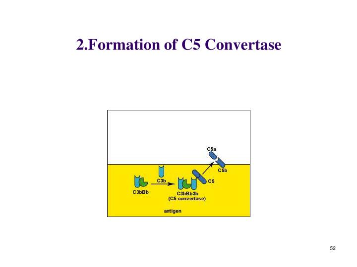 2.Formation of C5 Convertase