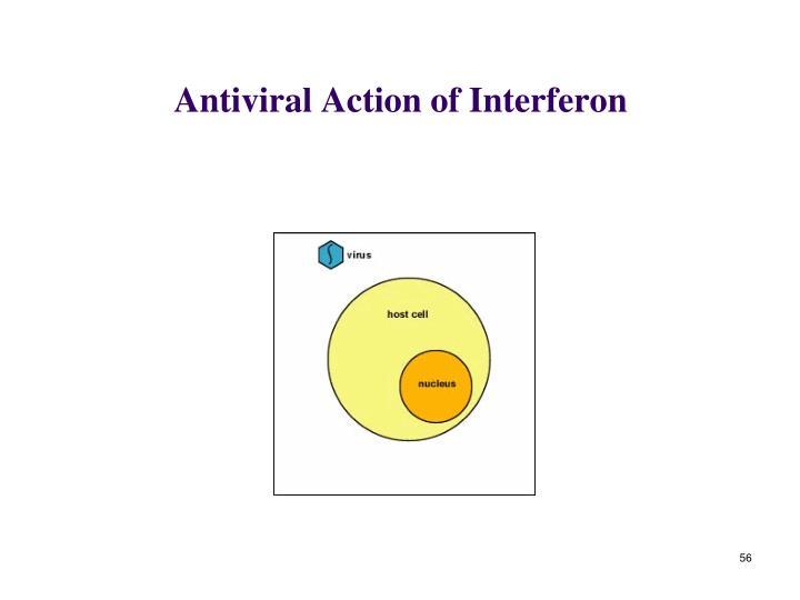 Antiviral Action of Interferon