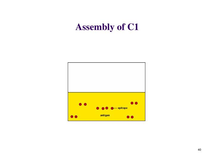 Assembly of C1