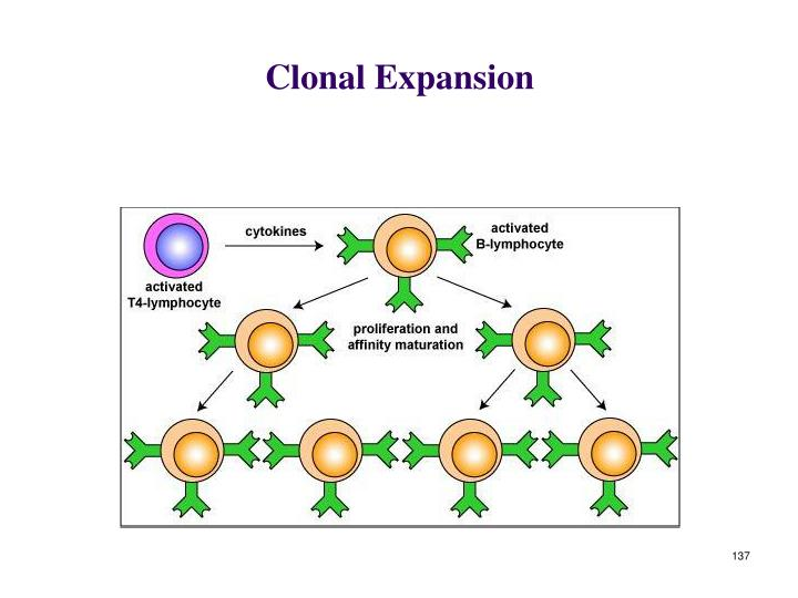 Clonal Expansion