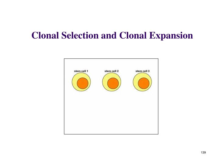 Clonal Selection and Clonal Expansion