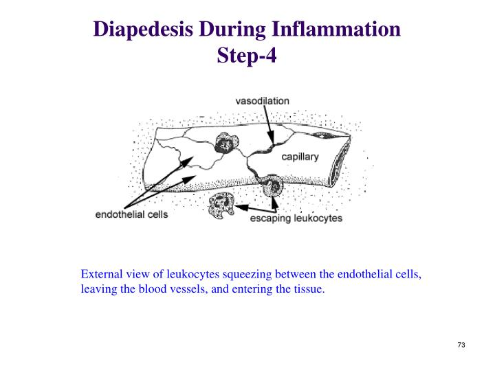 Diapedesis During Inflammation