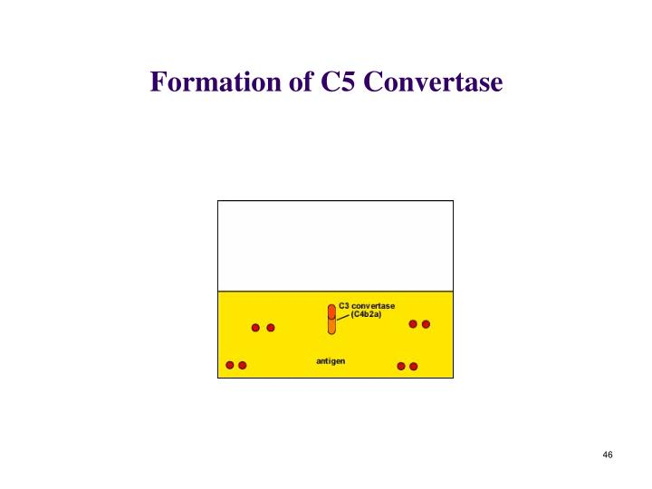 Formation of C5 Convertase