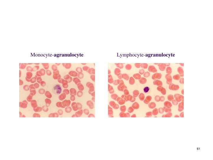 Monocyte-
